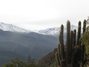 Cacti in front of the Andes